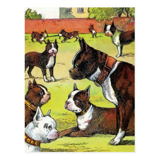 Boston Terrier and Puppies Vintage Illustration Postcard