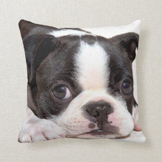 Boston Terrier Black and White Puppy Cushion