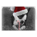Boston terrier candy cane christmas card