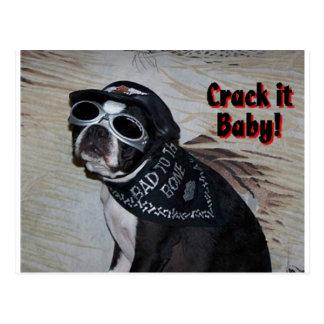 Boston Terrier:  Crack it, Baby! Postcard