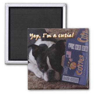 Boston Terrier:  Cutie Square Magnet