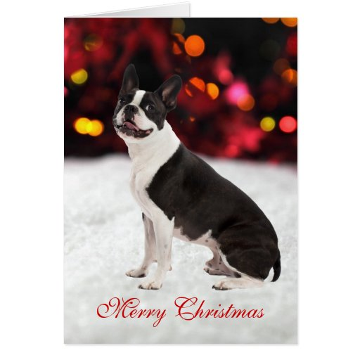 Boston Terrier dog cute custom Christmas Card