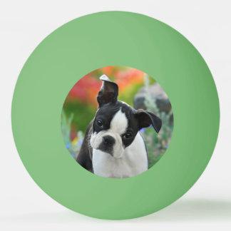 Boston Terrier Dog Cute Puppy Animal Head Photo Ping Pong Ball