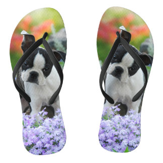 Boston Terrier Dog Cute Puppy Portrait Pet Photo - Thongs