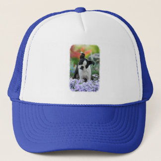 Boston Terrier Dog Cute Puppy Portrait Photo - cap
