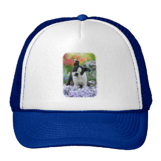 Boston Terrier Dog Cute Puppy Portrait Photo - cap
