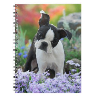 Boston Terrier Dog Cute Puppy Portrait, Photocover Notebooks
