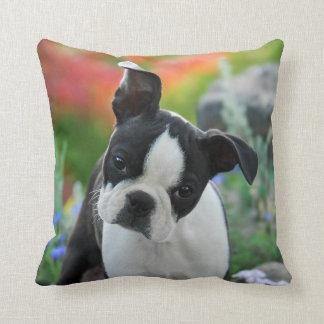 Boston Terrier Dog Cute Puppy Portrait, Square Cushion