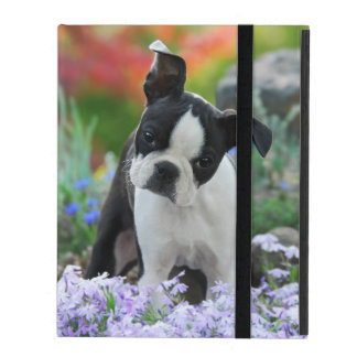 Boston Terrier Dog Cute Puppy, protective hardcase Case For iPad