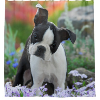 Boston Terrier Dog Cute Puppy, Tub Shower Curtain