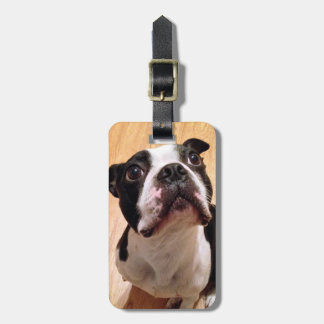 Boston Terrier Dog Luggage Tag