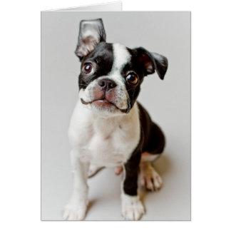 Boston Terrier dog puppy. Card