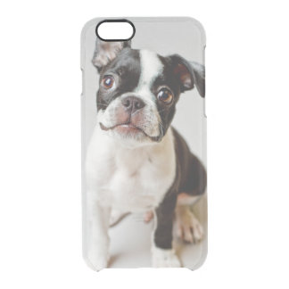 Boston Terrier dog puppy. Clear iPhone 6/6S Case
