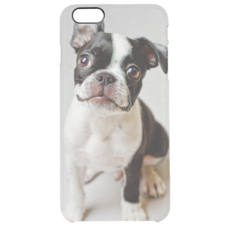 Boston Terrier dog puppy. Clear iPhone 6 Plus Case