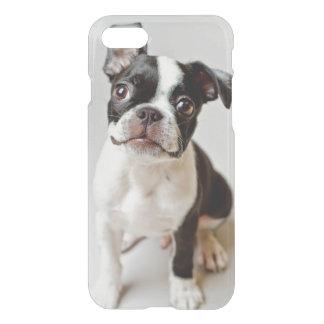 Boston Terrier dog puppy. iPhone 7 Case