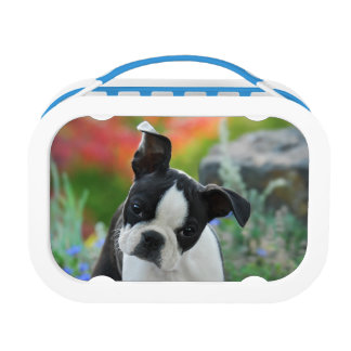 Boston Terrier Dog Puppy Lunch Box