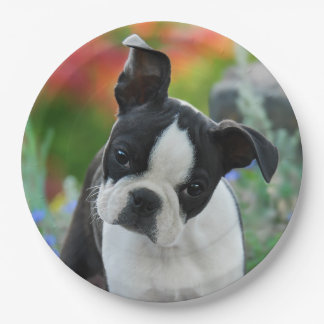 Boston Terrier Dog Puppy Portrait, happy party 9 Inch Paper Plate
