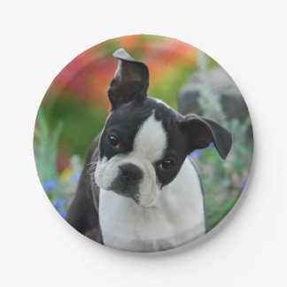 Boston Terrier Dog Puppy Portrait, party 7 Inch Paper Plate
