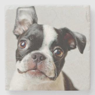Boston Terrier dog puppy. Stone Coaster
