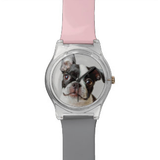 Boston Terrier dog puppy. Watch