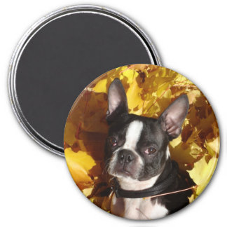 Boston Terrier Dog Surrounded by Fall Leaves Magne Magnet