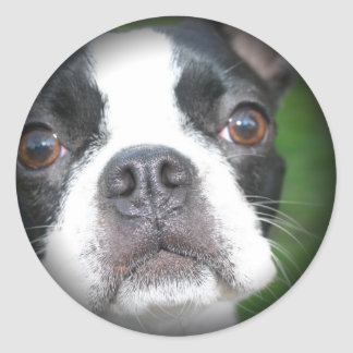 Boston Terrier Faded Round Stickers