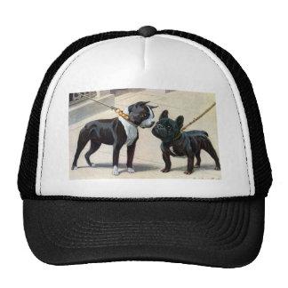 Boston Terrier  & French Bulldog Cap