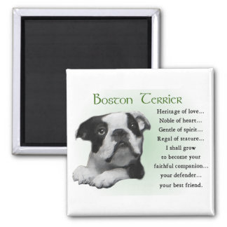 Boston Terrier Gifts Square Magnet