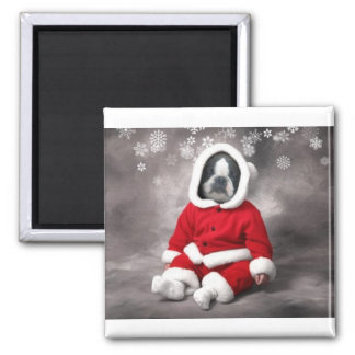BOSTON TERRIER IN XMAS OUTFIT SQUARE MAGNET