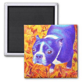 """Boston Terrier Magnet - """"Daisy"""