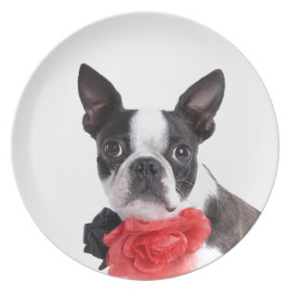 Boston Terrier Mollie mouse child Party Plates