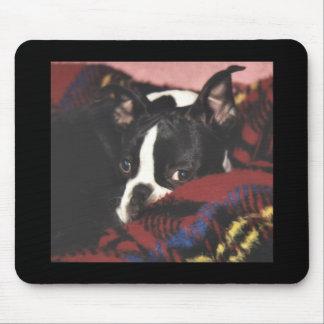 Boston Terrier:  Peek-a-Boo Mouse Pad