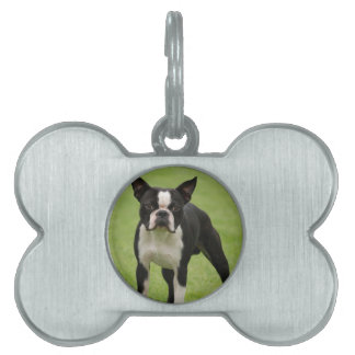 Boston terrier pet ID tags
