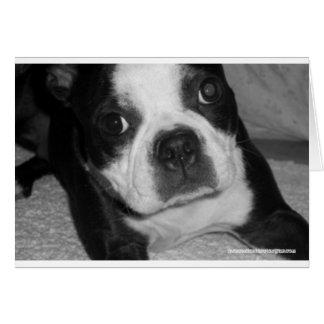 Boston Terrier Pet Sympathy Cards