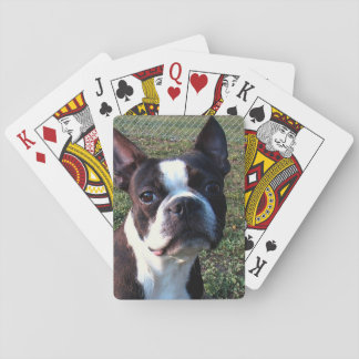 Boston_Terrier.png Playing Cards
