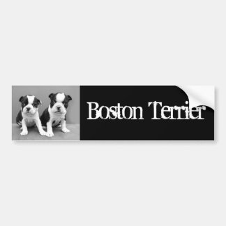 Boston Terrier Puppies bumpr sticker Car Bumper Sticker