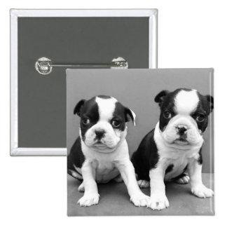 Boston Terrier Puppies button