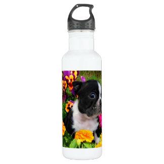 Boston Terrier puppy 710 Ml Water Bottle