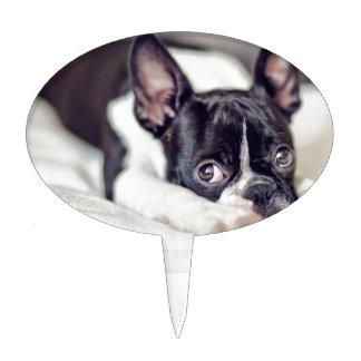 Boston Terrier Puppy Cake Pick
