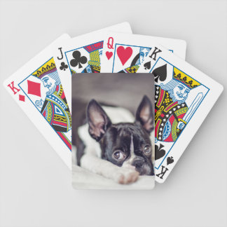 Boston Terrier Puppy Deck Of Cards