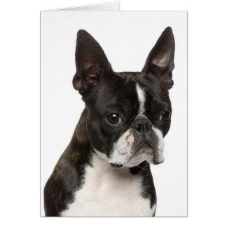 Boston Terrier Puppy Dog Notecard Note Card