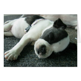 Boston terrier puppy greeting cards