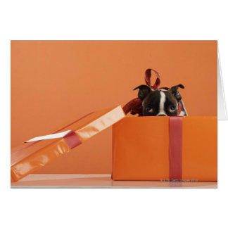 Boston terrier puppy in gift box cards