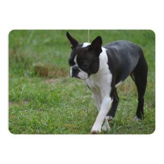 Boston Terrier Puppy Invitations