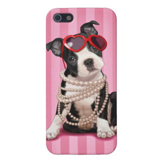 Boston Terrier Puppy iPhone 5/5S Cover