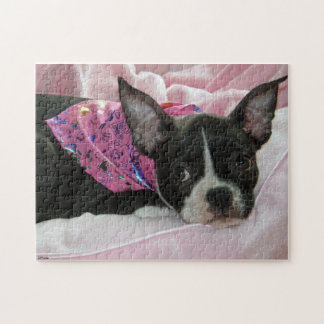 Boston Terrier Puppy Jigsaw Puzzle