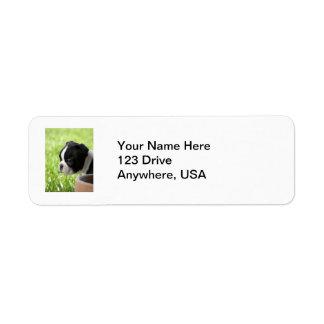 Boston Terrier Puppy Return Address Label