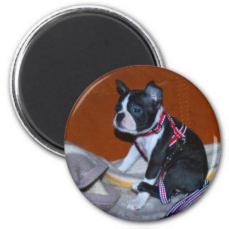 Boston Terrier puppy 6 Cm Round Magnet