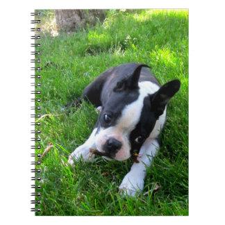 Boston Terrier Puppy Notebook