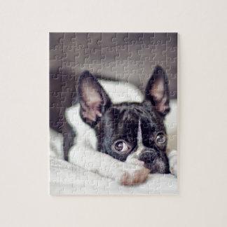 Boston Terrier Puppy Puzzles